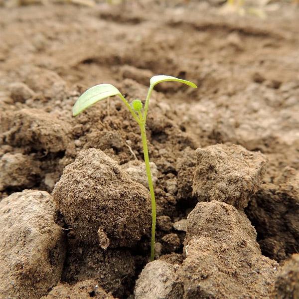 Labor Ins AG - Bodenproben für Ihren Erfolg