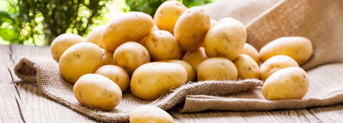 Labor Ins AG - Kartoffelanbau