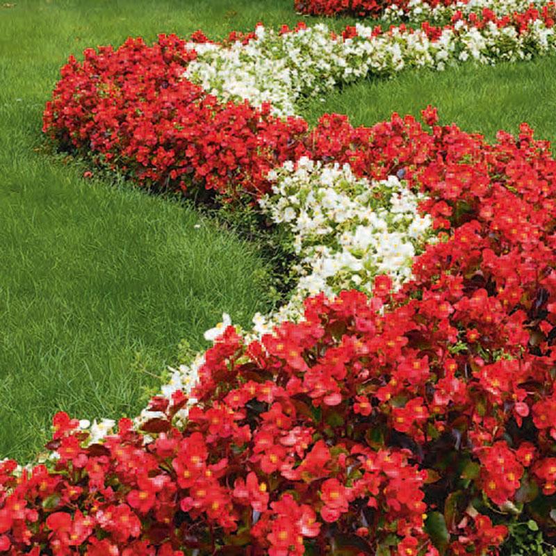Labor Ins AG - Green & Garden